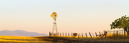 Golden-Windmill
